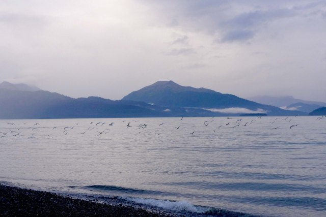 Seagulls dancing